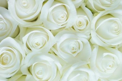 roses-2746116_1280