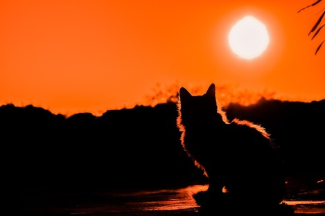 sunset and cat