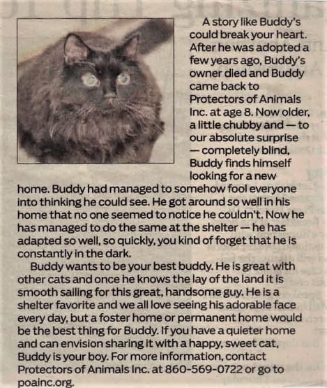 Buddy's ad