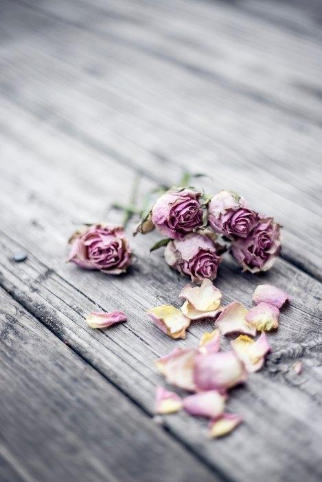 roses - sorrow