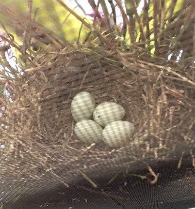 eggs 5-24-18