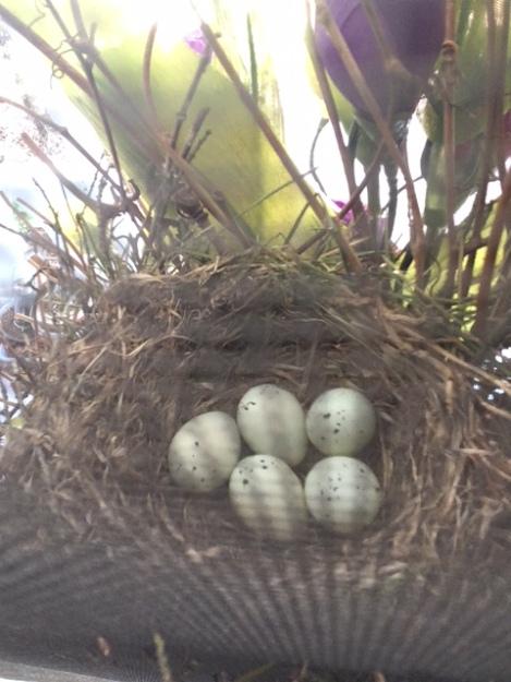 eggs 5-25-18