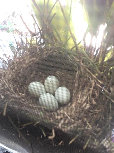 four eggs 5-29-18