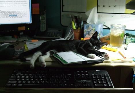 Livy on desk 2008