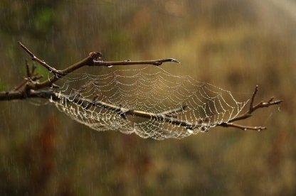 spider-web-3769149_640
