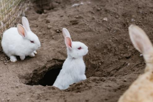 rabbits in hole - Sincerely Media on Unsplash